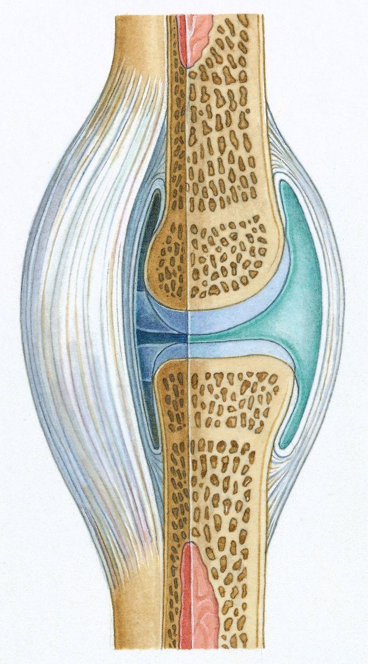 17 besten joints Bilder auf Pinterest | Anatomie, Menschliche ...