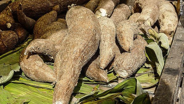 Des sacs en plastique biodégradable à base d'amidon de manioc