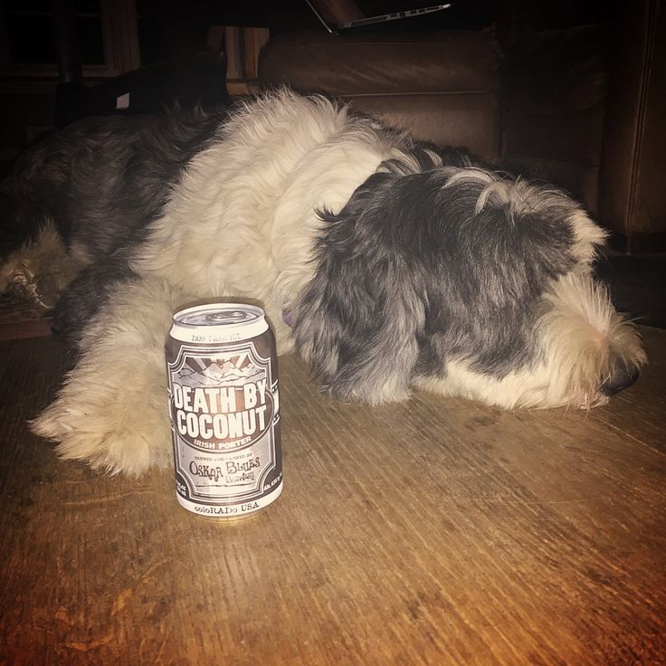 Death by Coconut by Oskar Blues Brewery while watching death by election on tv. Nice porter with some coconut goodness. Sheepdog Approved!