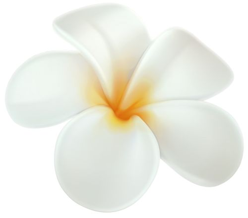plumeria png clip art hawaiian flowers tattoo ideas hawaii images clip art Hawaiian Flower Clip Art
