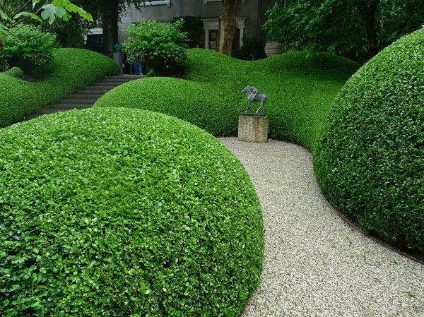 Huge hedges of perfectly sculpted privet