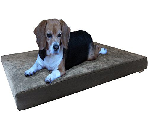 Best Crate For Large Dogs Plastic Beige