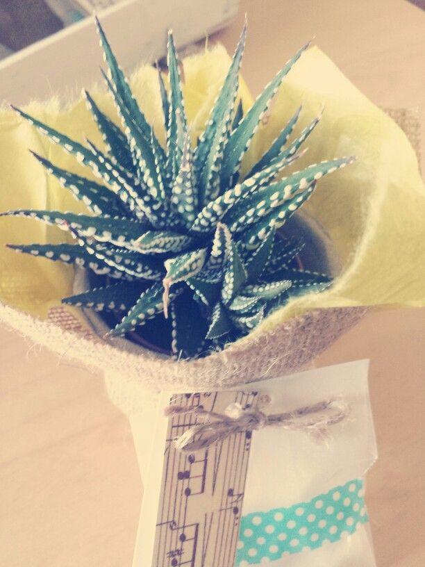 Bomboniere per matrimonio, piantine grasse confezionate a mano #wedding #bomboniere #hamdmade