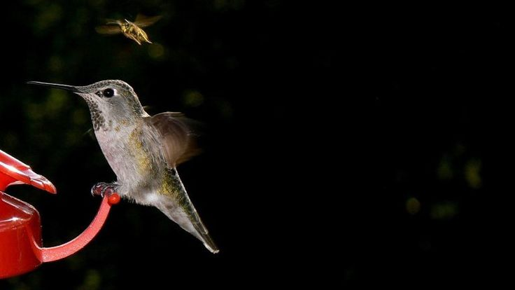 How to keep bees away from hummingbird feeders insect