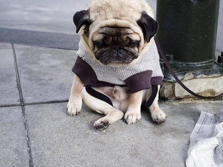 22 Guilty Dog Photos Of Cute Canines Looking Sorry