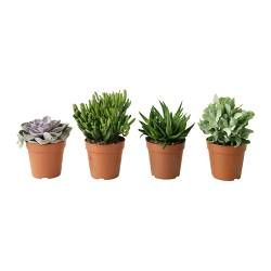 Decorative Outdoor pots and plants - $6.99 IKEA