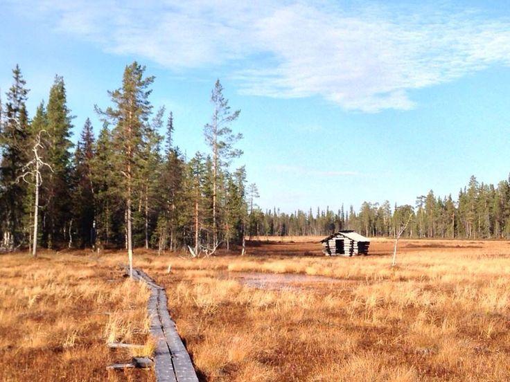 Aapa mire in Luosto, Pyhä-Luosto National Park photo Anne Niemistö