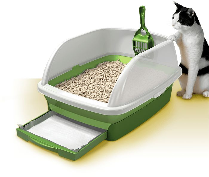picture regarding Tidy Cat Litter Coupons Printable named Tidy cat muddle discount codes : 2018 Sale
