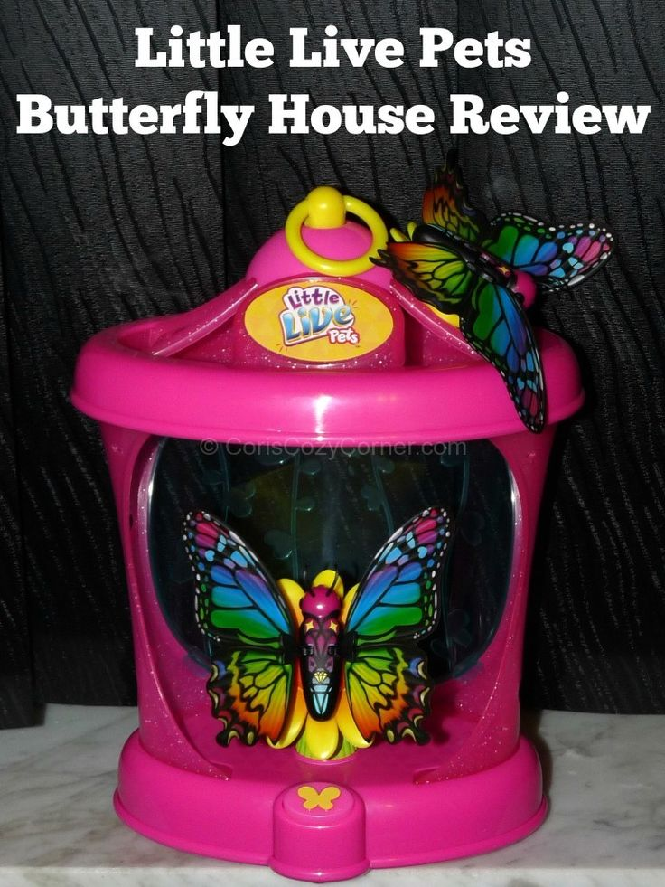 Little Live Pets Butterfly House Review
