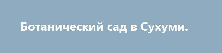Ботанический сад в Сухуми. http://kleinburd.ru/news/botanicheskij-sad-v-suxumi/  Оригинал взят у skaznov в Ботанический сад в Сухуми. Это наверное самое неоднозначное место в Сухуми. Призванное быть эталоном ботаники и магнитом для приезжих гостей, в настоящее время он производит очень удручающее впечатление. В саду гораздо интереснее разглядывать стертые ретро таблички с названиями растений и прочей флоры, чем сами экспонаты. При этом вход составляет около […]