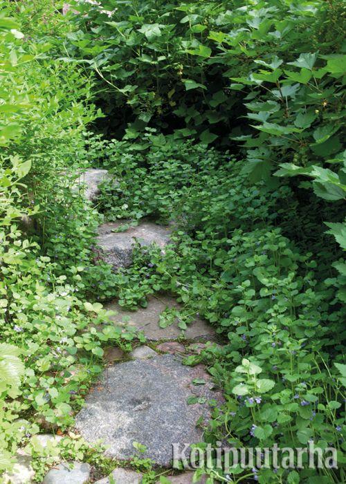 Huomaamaton polku syntyy kasvillisuuden sekaan upotetuista astinkivistä. www.kotipuutarha.fi