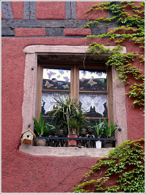 window, Riquewihr, Haut-Rhin France