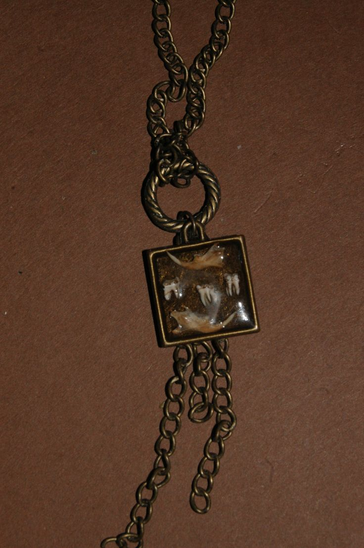 Mouse jaw and Squirrel Teeth Necklace by BarelyBones on Etsy, $20.00