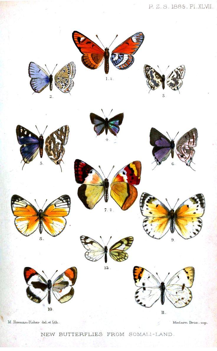 102 best entomological illustrations images on pinterest