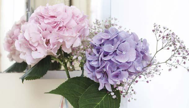 #Hortensia: flores gigantes