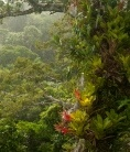 Tropical forests unexpectedly resilient to climate change : Nature News & Comment