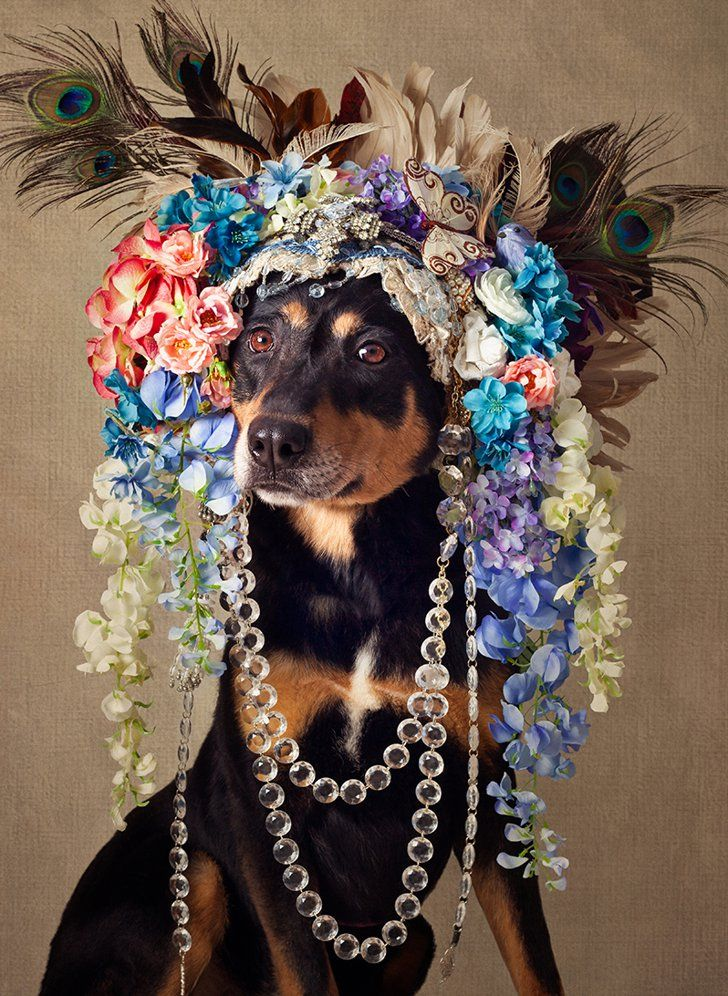 This Photographer Gives Dogs Makeovers to Help Them Find Forever Homes