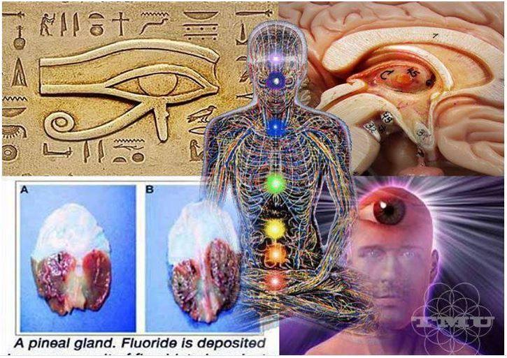 Epifiz Bezinin 3. Göz Olduğu Pineal Bezinizin Temizlenmesi Pineal Bezinizin Korunması Epifiz Bezi:Üçüncü Gözümüz  Epifiz için Faydalı Gıdalar Beyin Epifizi Ruh-Beden-Epifiz Taç Çakra Üçüncü Göz