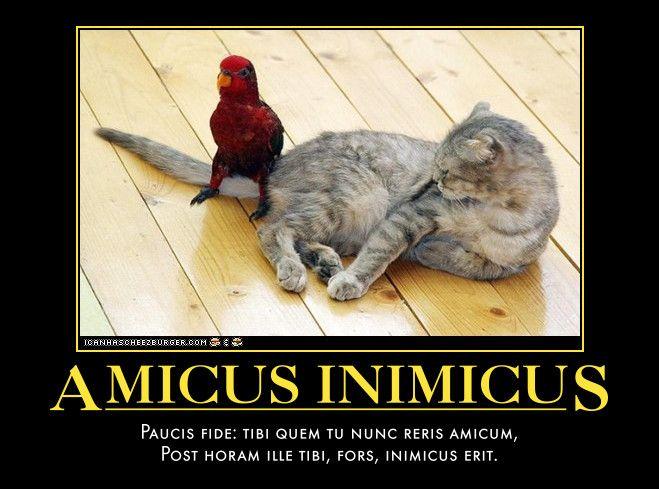 Amicus Inimicus Paucis fide: tibi quem tu nunc reris amicum, Post horam ille tibi, fors, inimicus erit.