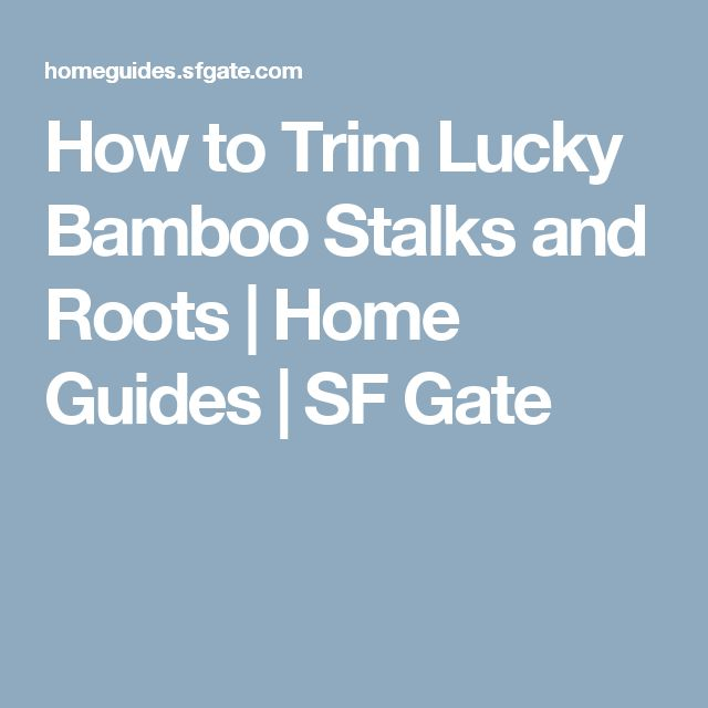 How to Trim Lucky Bamboo Stalks and Roots | Home Guides | SF Gate