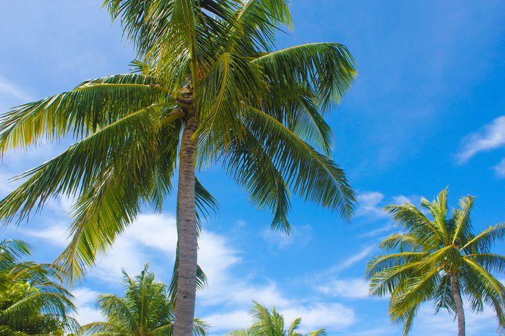Photo Friday: Paradise. Bij het thema #Paradise van deze week waan ik mij gelijk weer terug bij onze #huwelijksreis naar de Malediven. Parelwitte #stranden, #palmbomen, helderblauw water, mooie #duikplekken, lekker eten: alle ingrediënten voor een waar #paradijs.