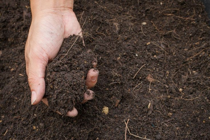 A soil scientist shares fun facts you never knew about