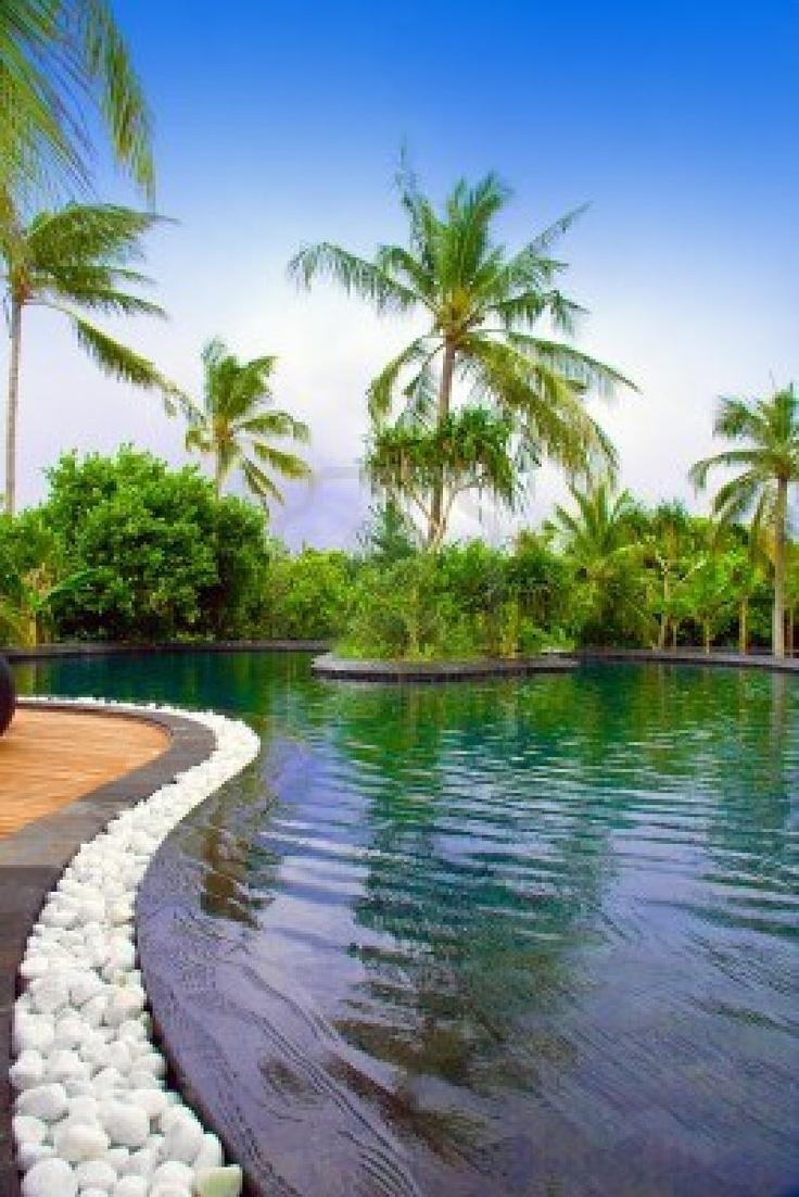 pin tropical backyard with florida native plants pool garden gazebo