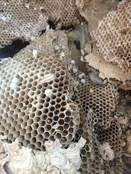 A wasps nest that crashed and broke up empty on the attic ...