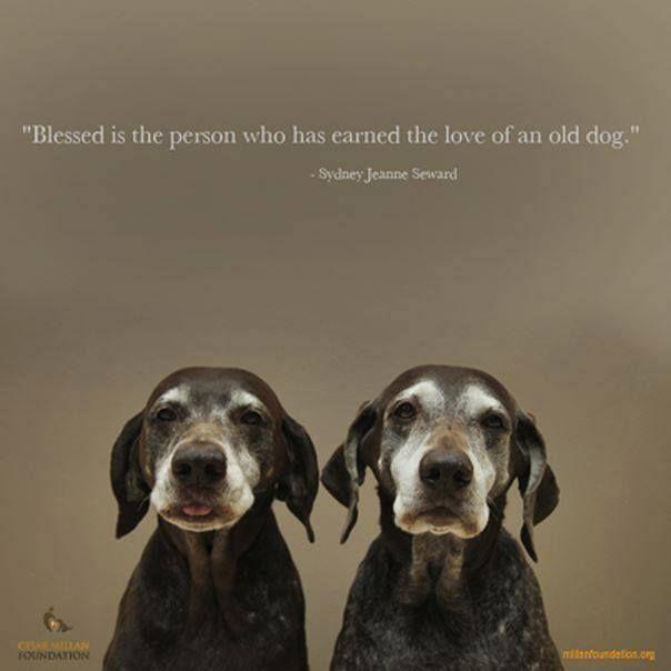 """"""" Gesegnet ist der Mensch, der die Liebe eines alten Hundes verdient hat """""""