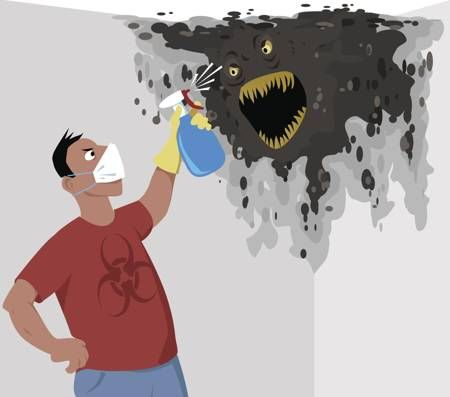 A guy removing black mold from the wall