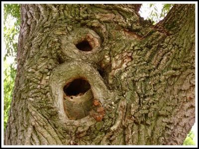 Tree hollows