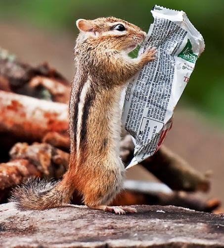 This hungry chipmunk must be a real health nut, as it appears to be reading through the list of ingredients on a breakfast bar wrapper before tucking in. By Michael Higgins  at Algonquin Provincial Park in Ontario, Canada.