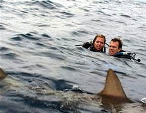 Pictures On Humans Shark Attack - Bing images