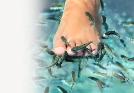 Dr. Balık Terapi  Dr. Balık Terapi, boyutları 2cm'den 5cm'ye kadar değişen dişsiz Garra Rufa balıklarının ayaklarınızdaki ölü derileri temizleyerek bakım ve masaj yaptığı apayrı bir terapi çeşididir. Bu terapiden yararlanmak için sadece kaplıca havuzuna oturmanız ve ayaklarınızı uzatmanız yeterli. Siz de Dr. Balık Terapi'yi seçin, mucizevi etkisini hemen yaşayın. http://www.magicgift.com/dr-balik-terapi-602