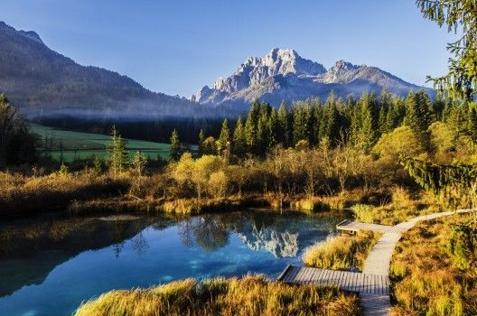landscape forester outdoor