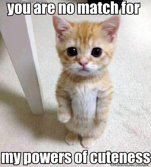 Cute cats 44 - Click on the picture for more cute cats and pets info and pictures. #CuteCats