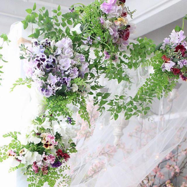 【kayoko_matsumae】さんのInstagramをピンしています。 《パンジーから桜へと誘う春のウェディングデコレーション🌸アジアンタム、スマイラックス、チュールがウェディングにぴったり。春の訪れをいっぱい感じる演出にうっとり♡ファンインダー越しに見るとあらためてその美しさにハッとします!#weddingflowers #illony #wedding #flowerdecorations #フラワーデコレーション #pansybouquet #パンジーブーケ #sweetpeas #桜 #チェリーブロッサム #cherryblossom #kayokomatsumae photo》