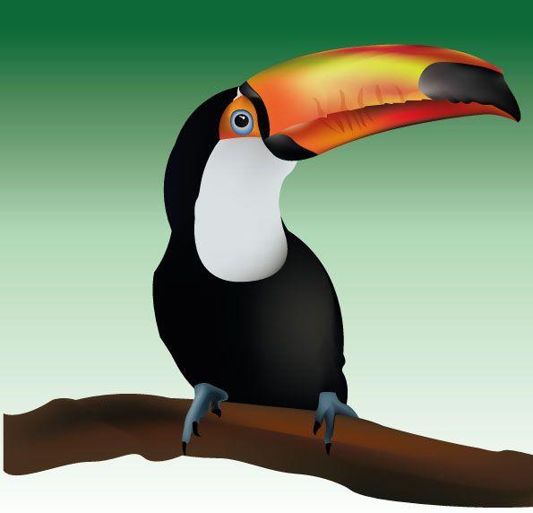 Tucan. Ilustración vectorial hecha en Illustrator