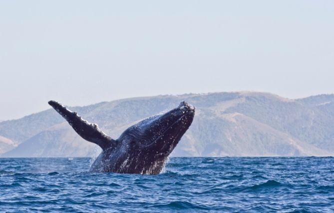 Südafrika - Reisen - Wal
