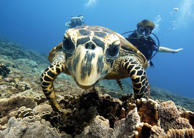 Hi! Im curious :-)-Diversia Diving Gili Trawangan Lombok Indonesia