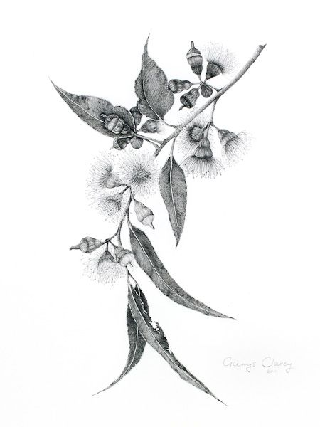 tattoo idea: eucalyptus flowers/leaves