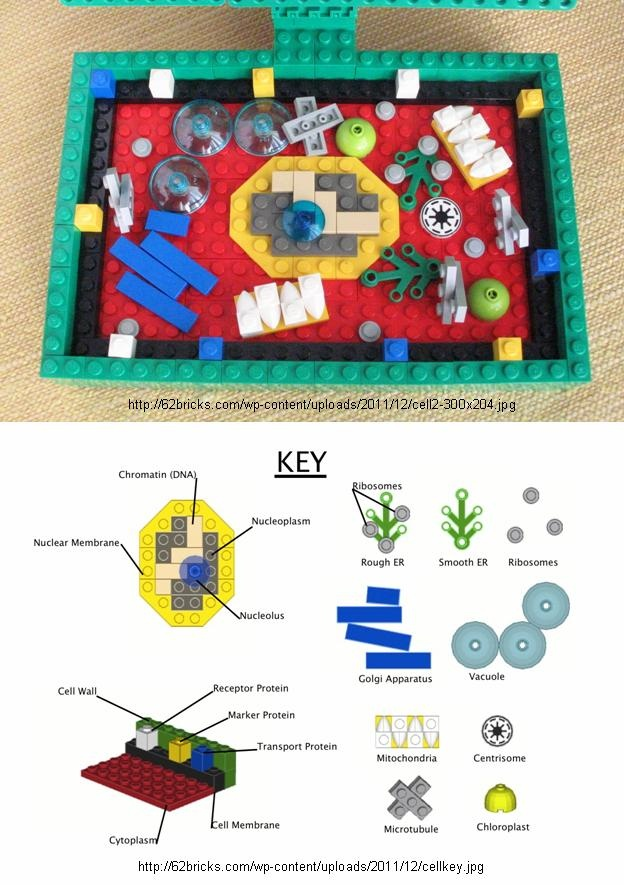 """plant cell model made of Legos (by Harris """"Brickman"""")"""