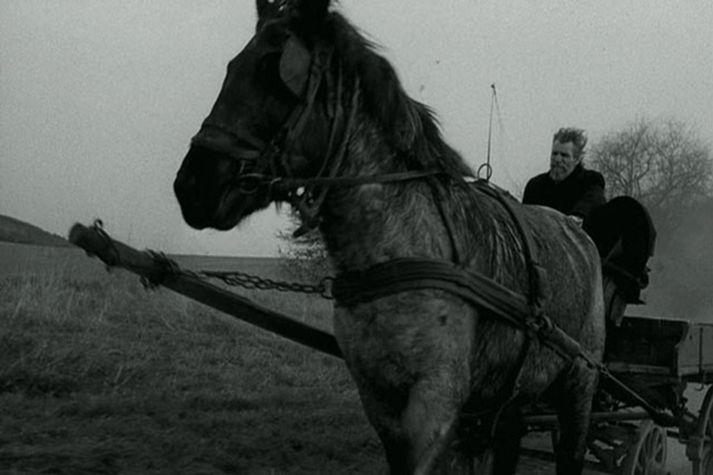 Escenas: El caballo de Turín de Béla Tarr  Béla Tarr Escenas