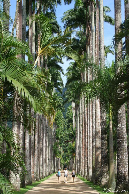 The Imperial Palms, Botanical Garden, Rio de Janeiro by bona,