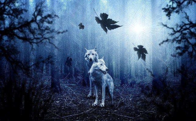 http://dog-school-training.info/behavior/