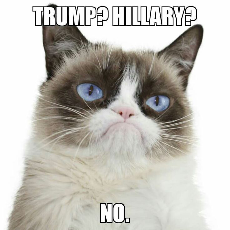 My feelings exactly Grumpy Cat.