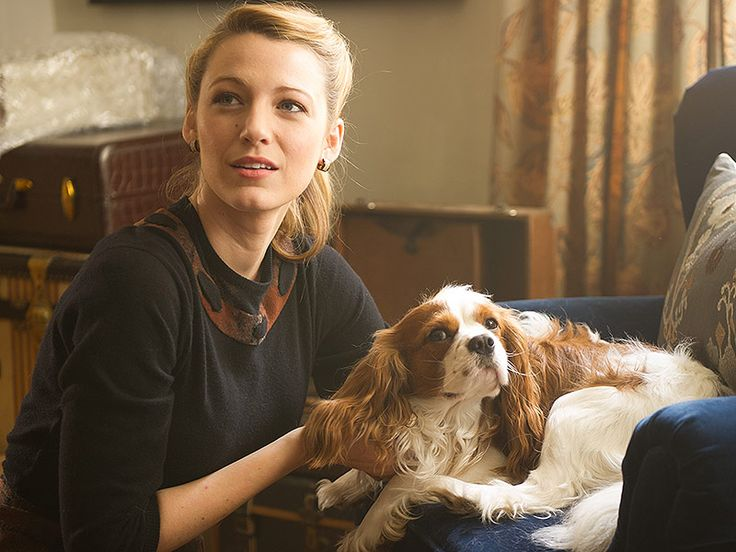"Blake Lively with her Cavalier King Charles Spaniel co-star in her movie ""The Age of Adaline"""