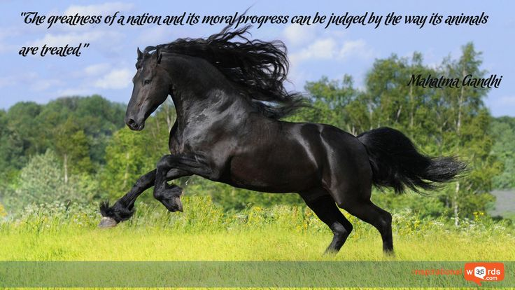 """Inspirational Wallpaper Quote by Mahatma Gandhi """"The greatness of a nation and its moral progress can be judged by the way its animals are treated."""""""