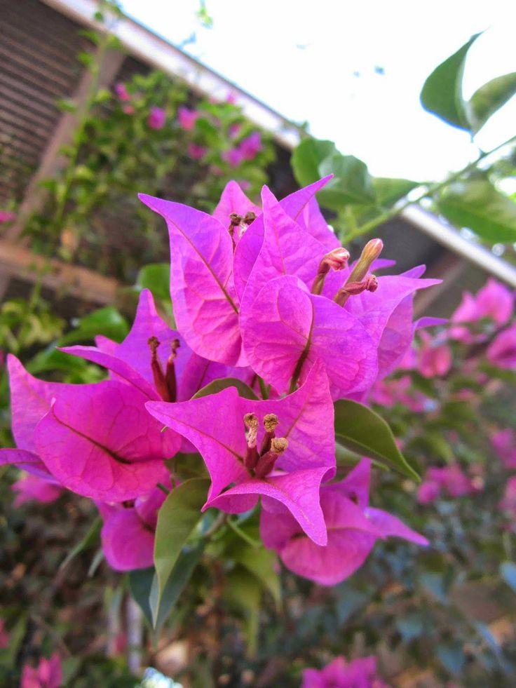 Sang Anggrek Merpati: Karyaku (Acrilic floral - Bougenville)