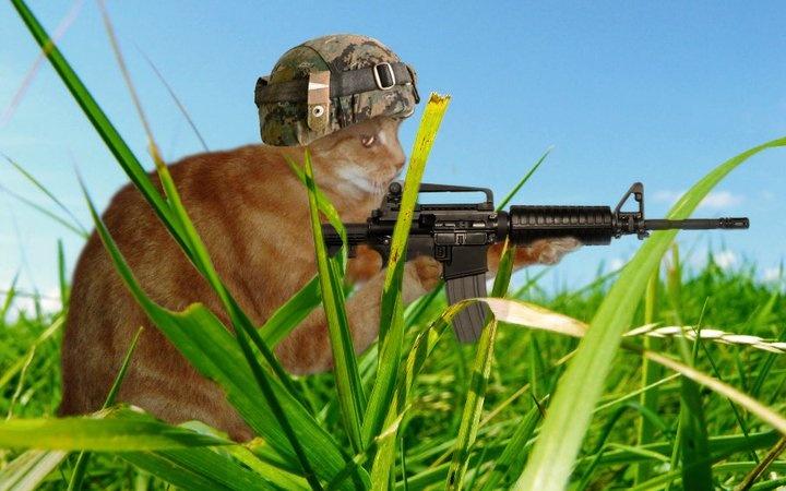 Tigger as 'Army Cat'